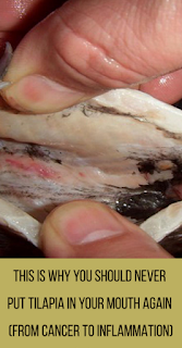 This is Why You Should Never Put Tilapia In Your Mouth Again (from Cancer to Inflammation)