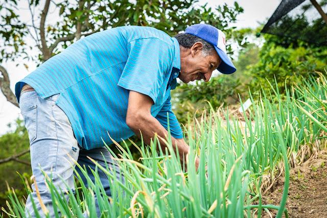 Producción Agropecuaria y la comercialización en los corregimientos de Medellín