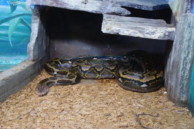 Uno dei rettili presenti nel rettilario