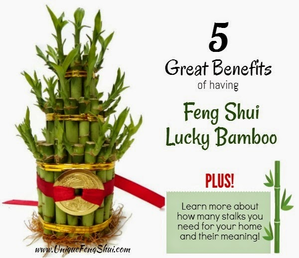 Unique feng shui blog meaning behind lucky bamboo - Plants for good feng shui ...