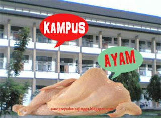 ayam kampus hot