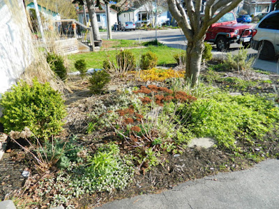 Birch Cliff Toronto spring garden clean up before Paul Jung Gardening Services