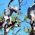 Señora de 85 años sobre un árbol