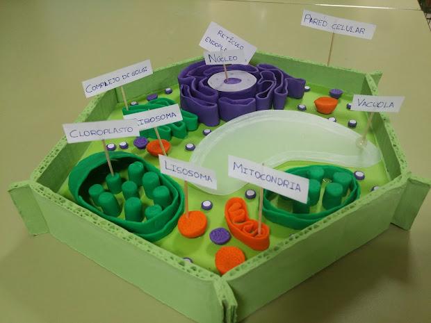 Como Hacer Una Maqueta De Una Celula Vegetal Con Material