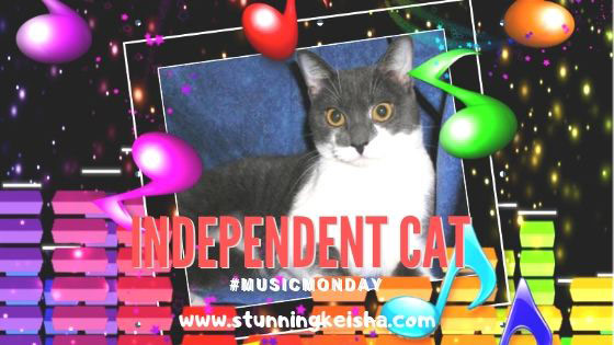 Independent Cat #MusicMonday