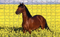 Brown horse puzzle