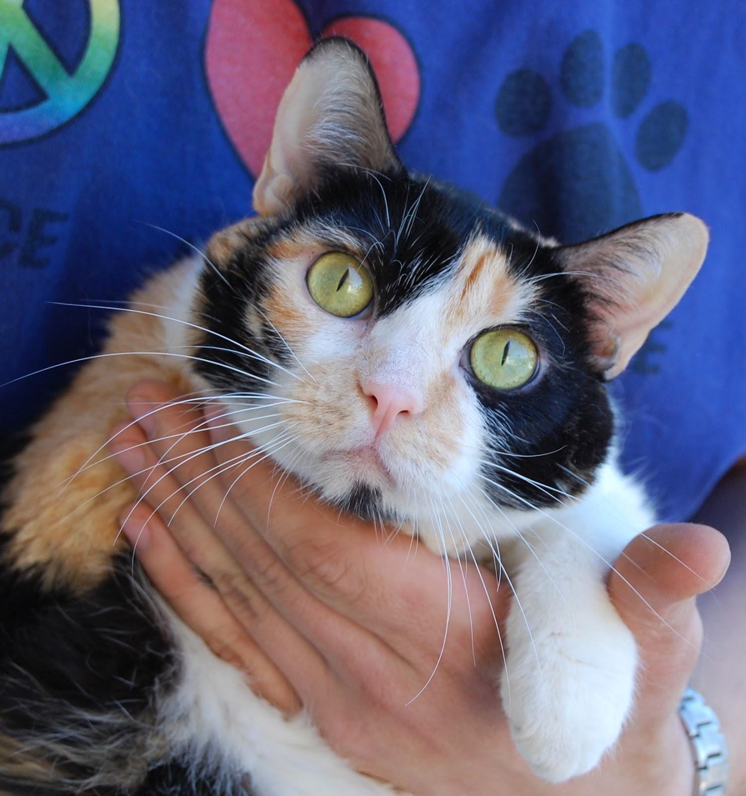 Nevada SPCA Animal Rescue: Frieda