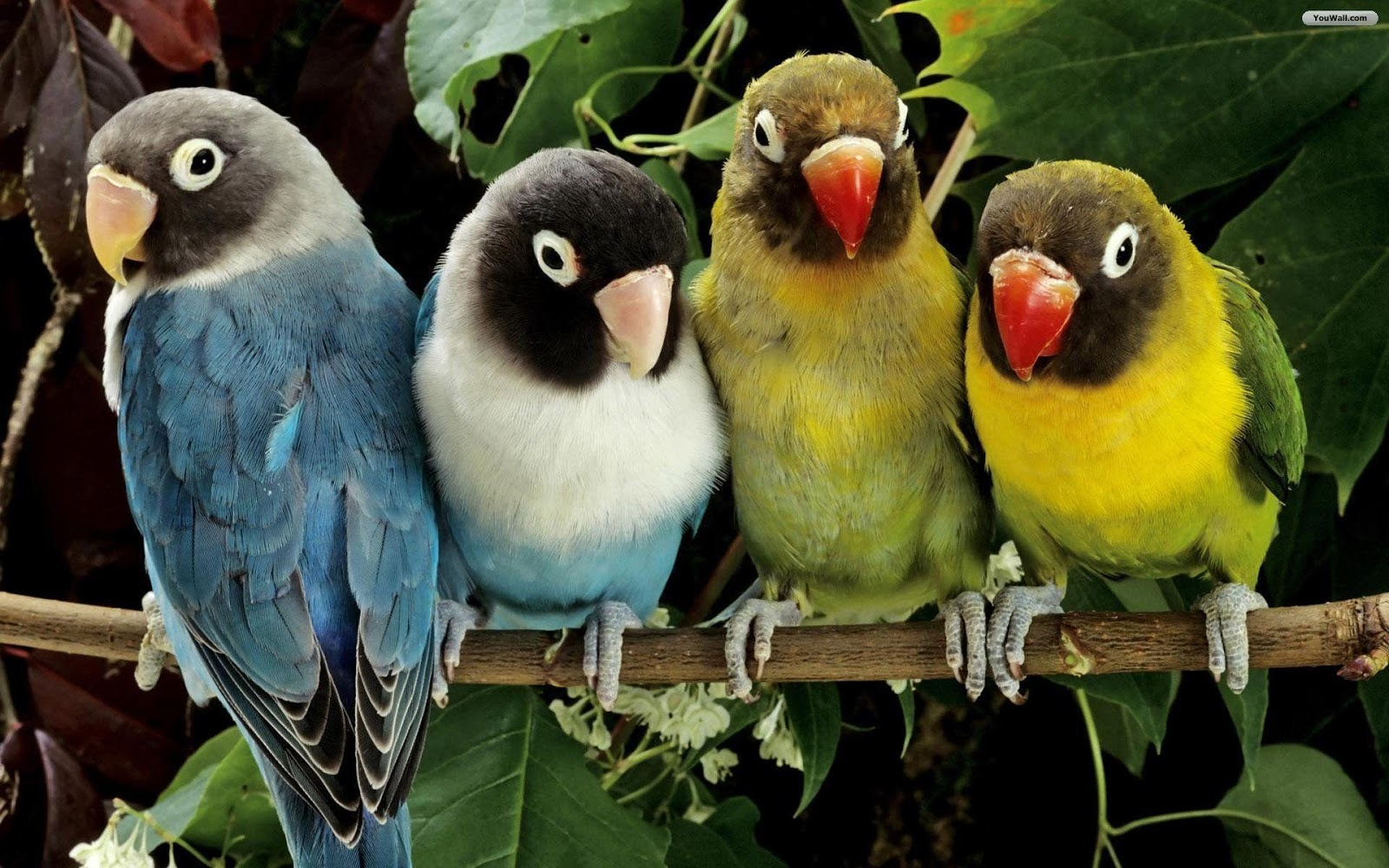 "Birds wallpapers"" HD wallpaper"