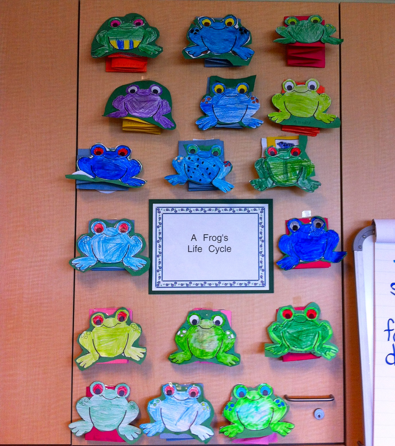 Karissa Li S Space The Frog S Life Cycle Activity