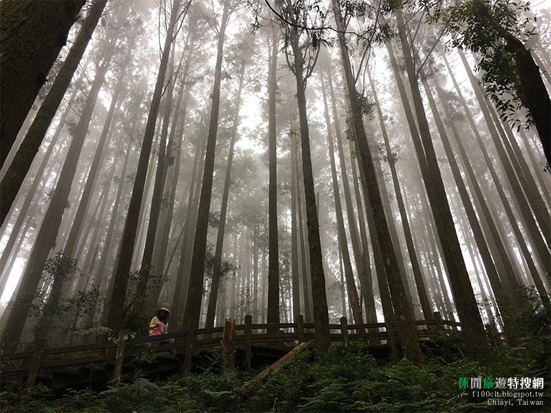 [臺灣.嘉義] 阿里山頂湖奮起湖之大凍山登山步道 不輸忘憂森林的秘境