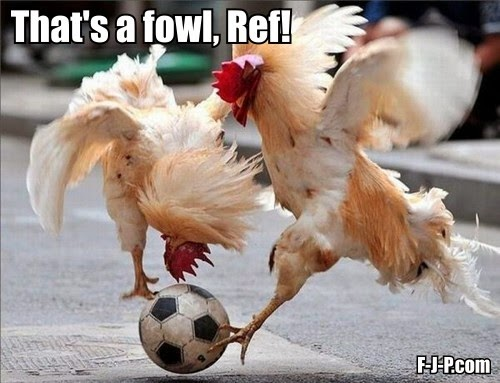 Funny Chicken Football Fowl Pun Joke Picture