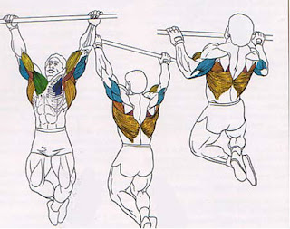 pull ups wide grip,back workouts for men