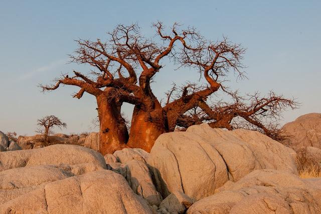 Baobab rock