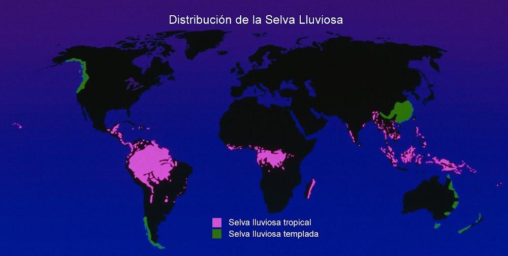 distribución, selva, lluviosa