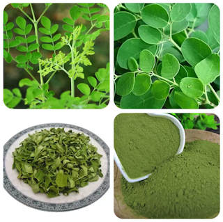 DetikHealth.net - Moringa Leaves Nutrition Content and Its Health Benefits