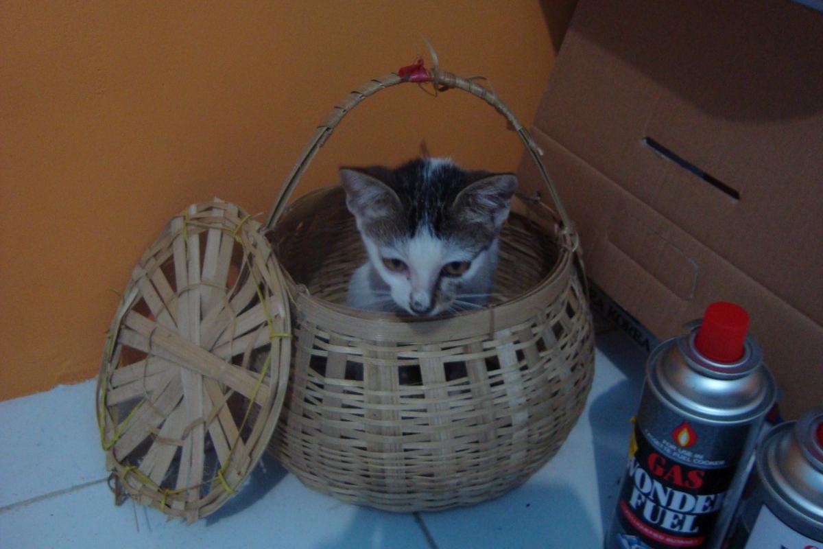 바구니에 들어가 있는 고양이
