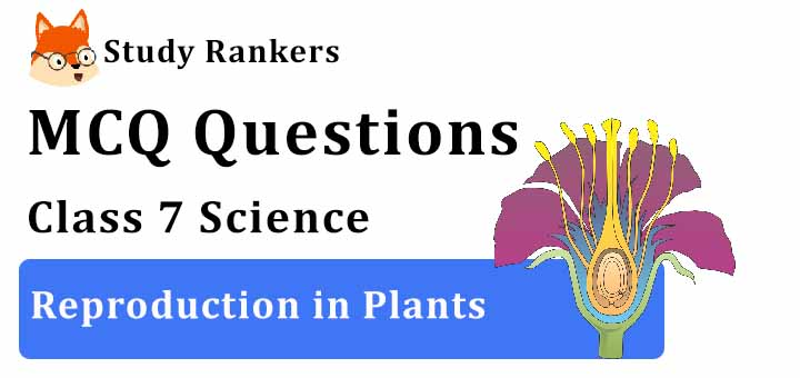 MCQ Questions for Class 7 Science: Ch 12 Reproduction in Plants