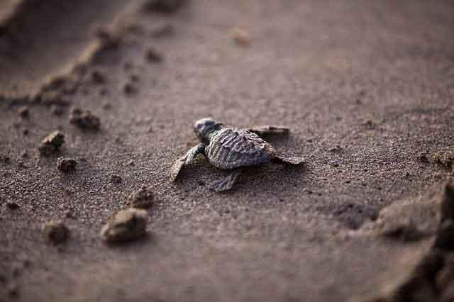 Perbedaan Kura-kura dan Penyu