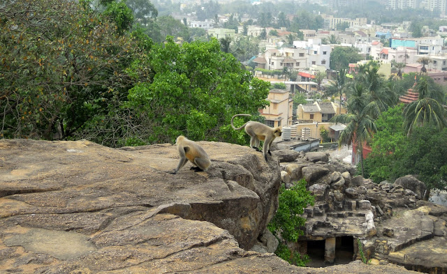 Monkeys, Udayagiri caves, Bhubaneshwar