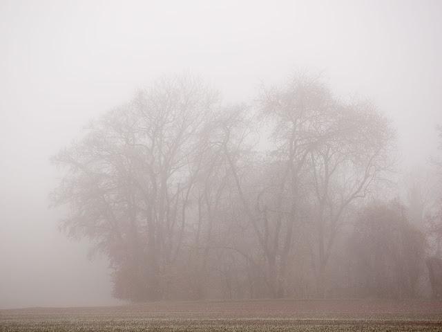 Eine Baumgruppe im Nebel