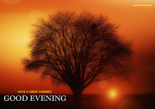 Good Evening Tree Sunset Images