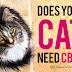 Best CBD Oil For Cats - CBD Cat Treats