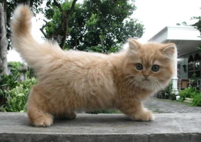 Langkah-Langkah Menyisir bulu Kucing