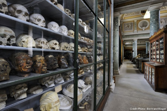 Museu de Anatomia de Montpellier