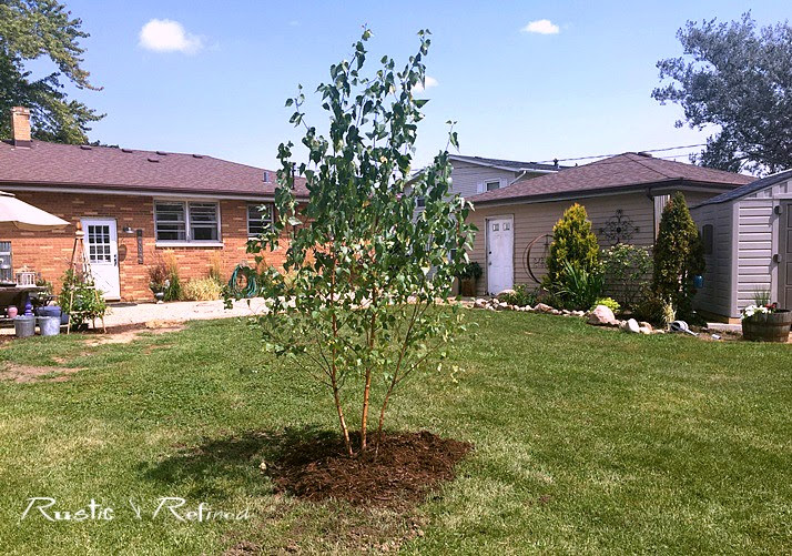 Ornamental Tree for Zone 5