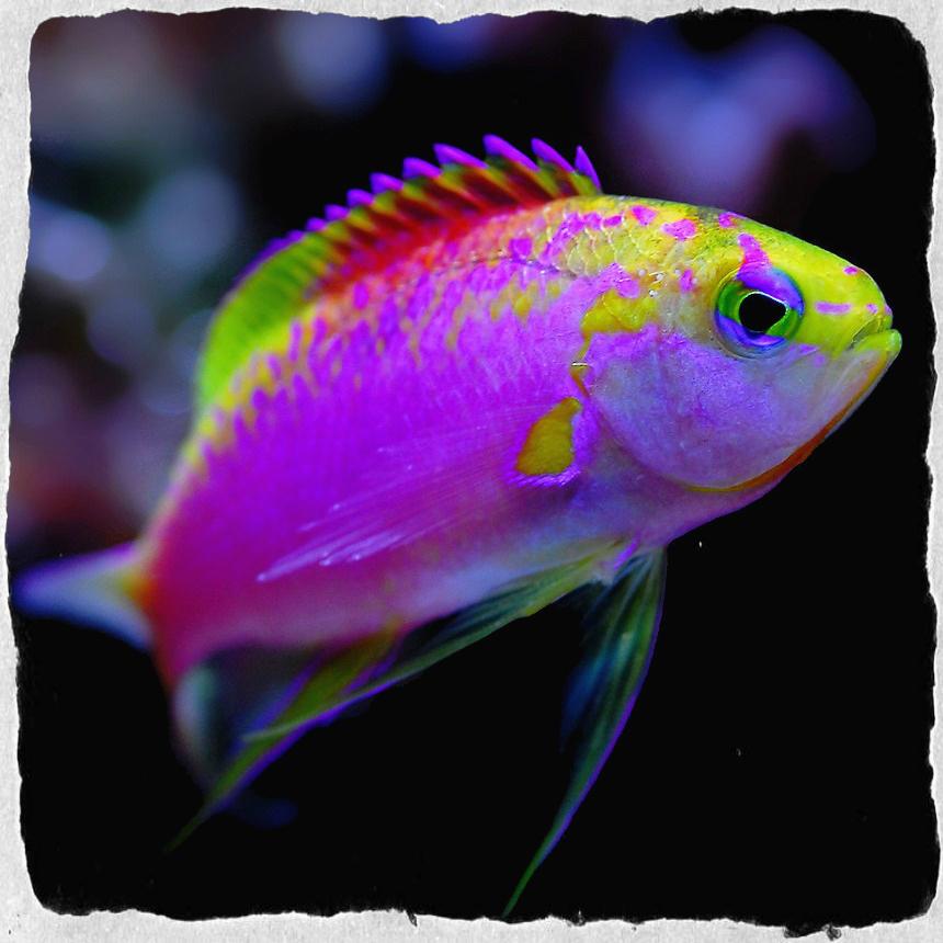 Tropical Fish Colors Tropical Fish Colors By Marcia
