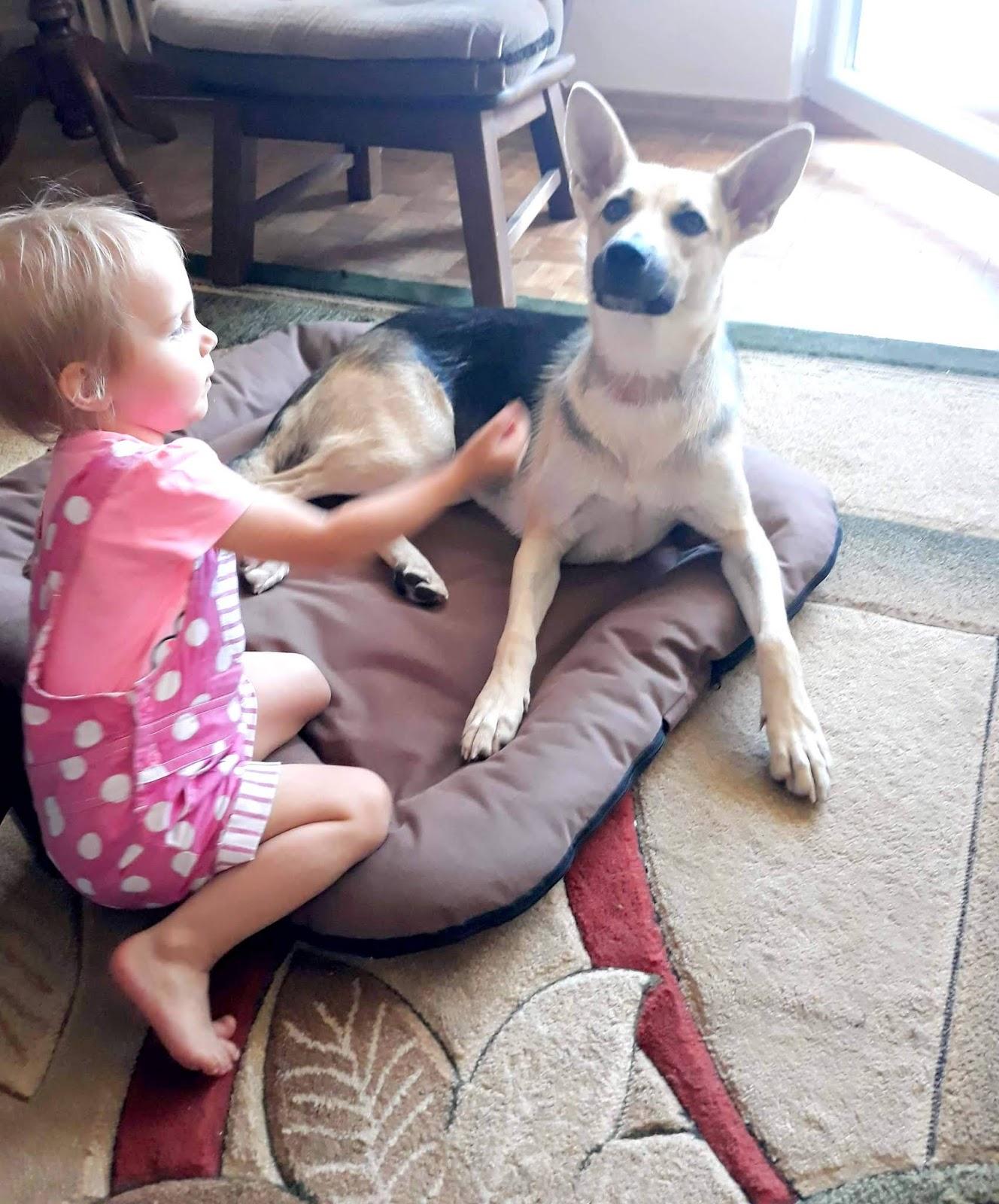 Pies z hodowli czy ze schroniska?