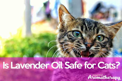 Is Lavender Oil Safe For Cats?