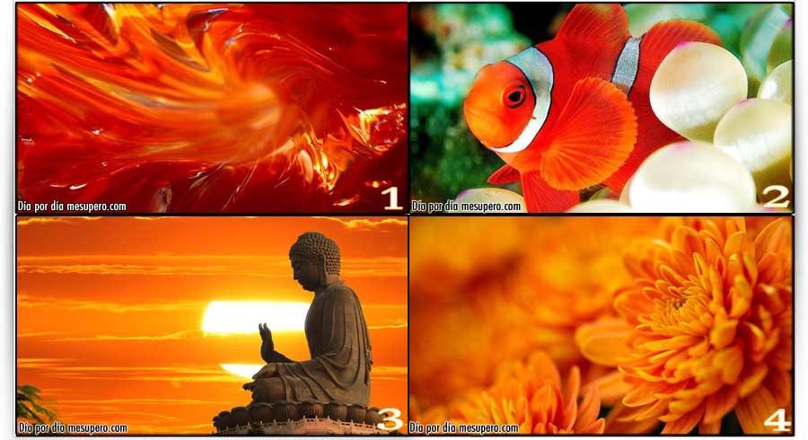Test del color naranja. ¿Cuál es tu naranja favorito?