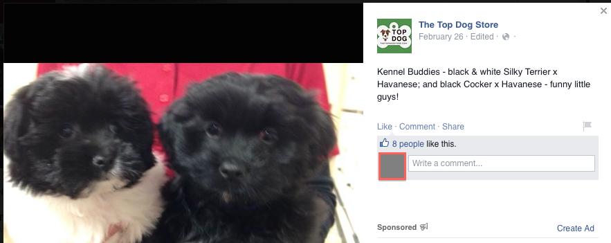 Puppy Mills: Exposed