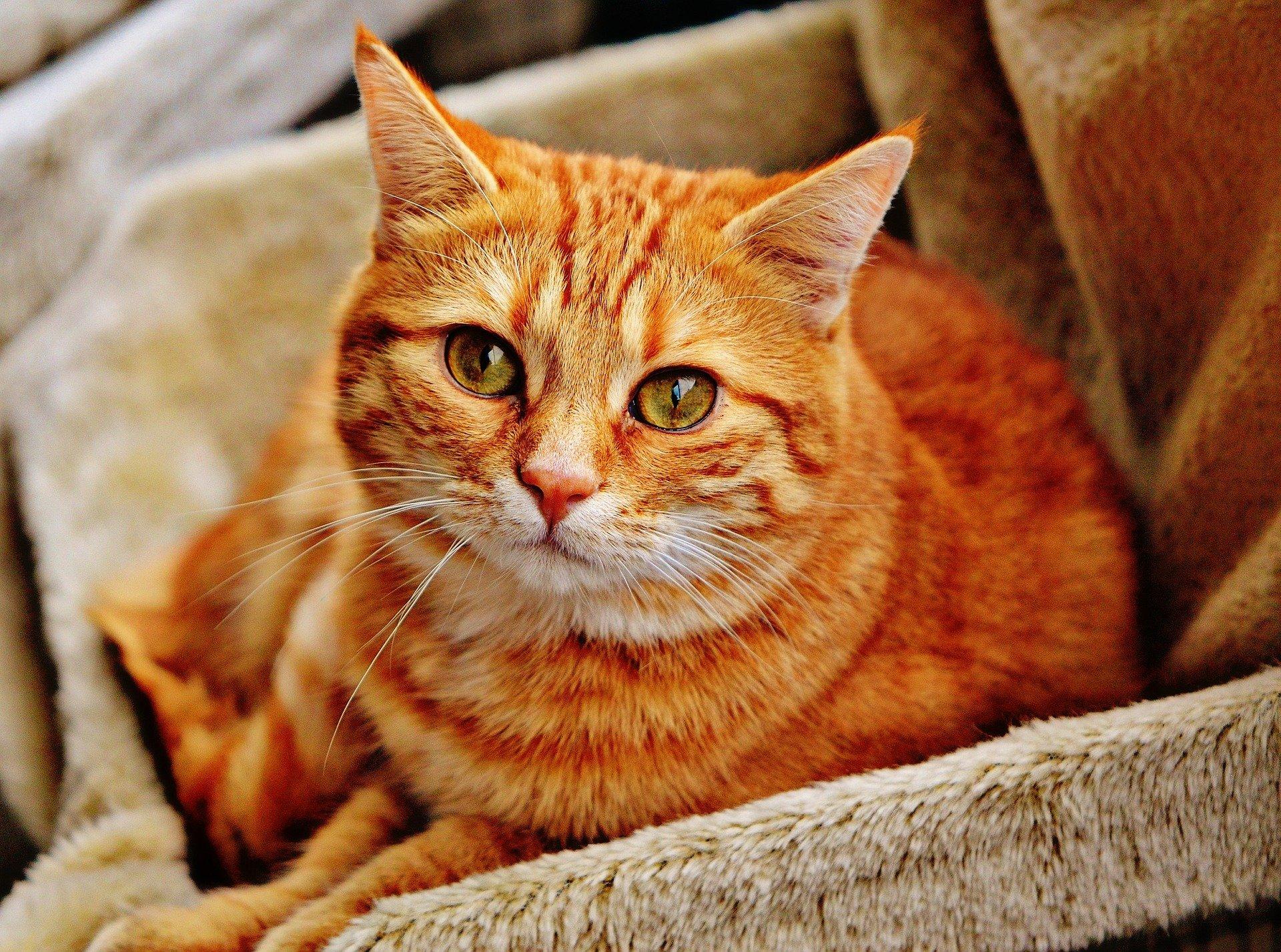 Leucemia Viral Felina