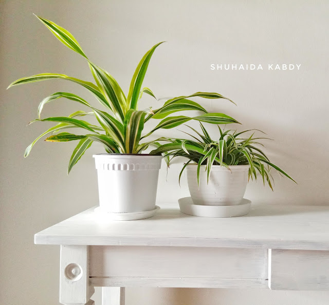 Koleksi Pokok Bersihkan Udara Dalam Rumah