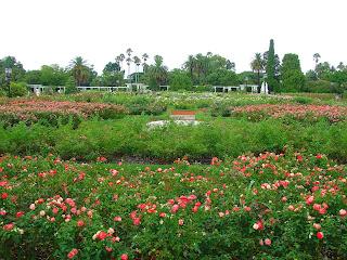 O Belo e Bem Cuidado Jardim de Rosas, em Buenos Aires