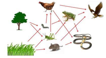 Gambar  Jaring-jaring makanan, Sumber: ilmulingkungan.com