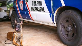 Guarda Municipal de Londrina (PR) participa de aperfeiçoamento no trabalho com cães