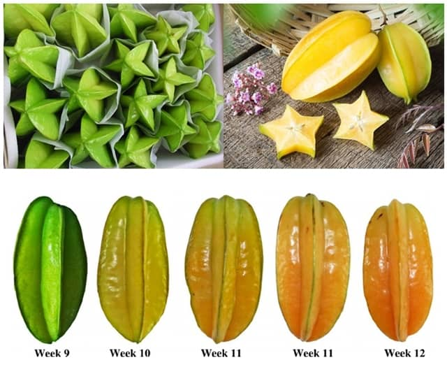 Health benefits of star fruits means Carambola