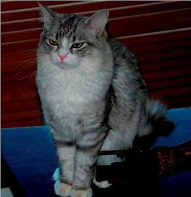 Foto kucing Sibella