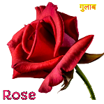Rose Flower Information In Hindi Language With Images Poster