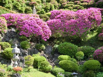 仏行寺のツツジ