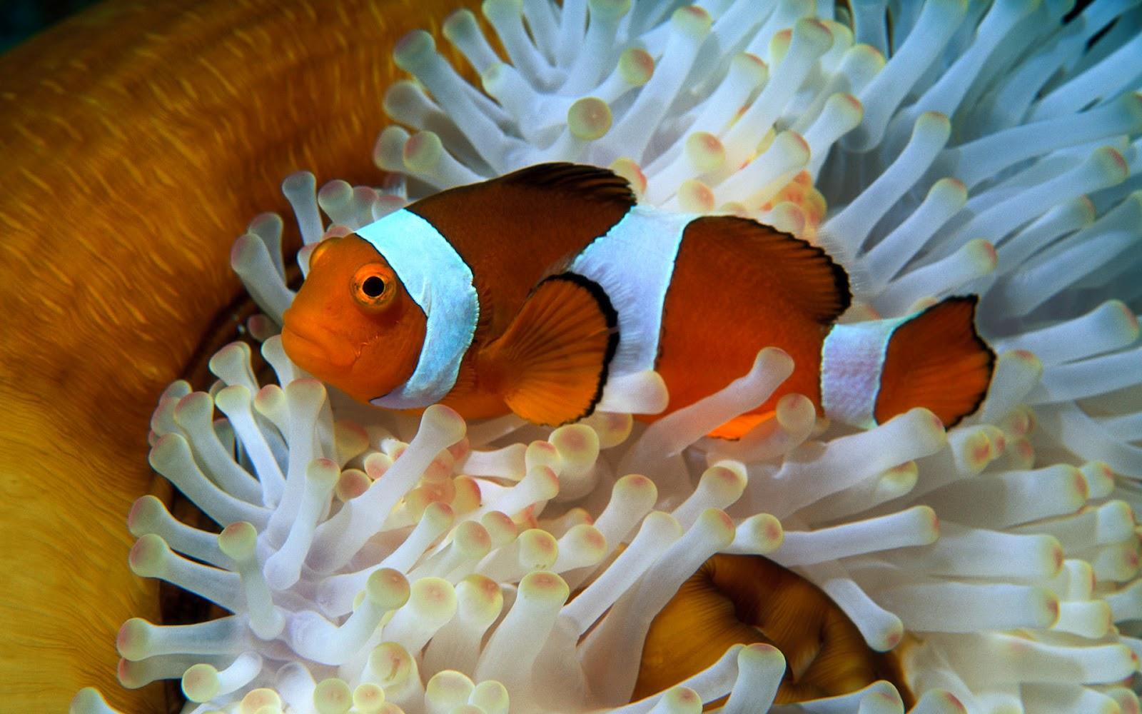 Top 27 Sea Animals Wallpapers In Hd: Best Wallpapers Collection: Best Ocean Life Wallpaper II