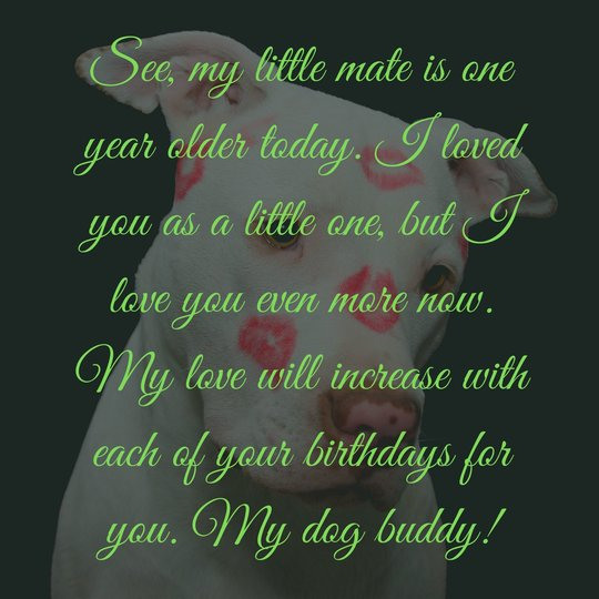 happy birthday quotes for dogs