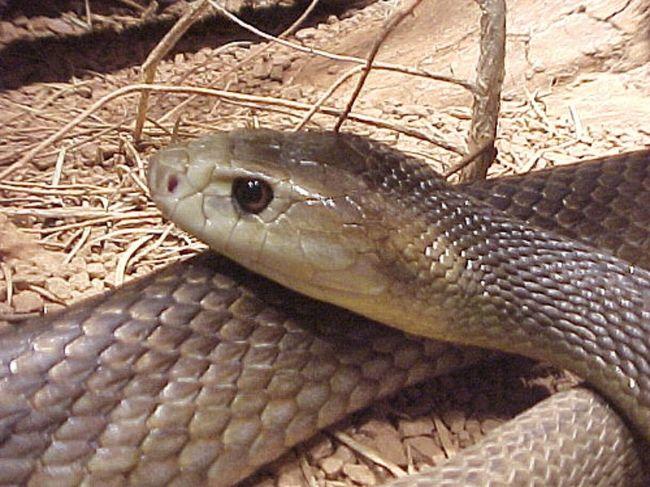 Φίδι δάγκωσε γυναίκα την ώρα που έκανε την ανάγκη της