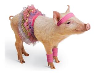 A piglet in a tutu