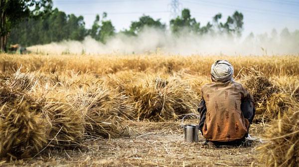 المحاصيل الزراعية الأوروبية في خطر، فهل تنشط المحاصيل الزراعية المصرية؟