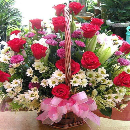 Beautiful Flowers in red, Photos