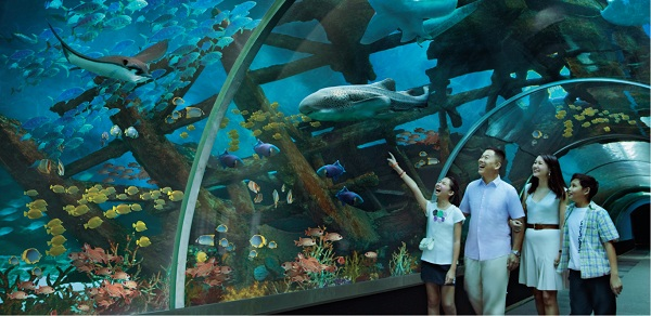 ngắm nhìn hơn 250 loài cá cùng hệ sinh thái đa dạng